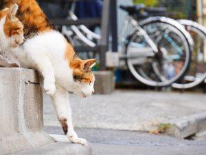 池袋キャッツフェスタ2018 〜All Cat Love〜
