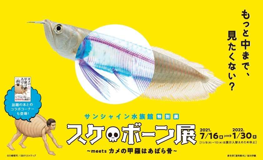 スケ・ボーン展~meets カメの甲羅はあばら骨~